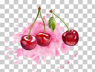 Cherry Watercolor Painting PNG