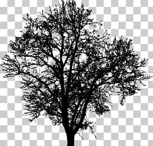 Tree Silhouette Branch Drawing PNG