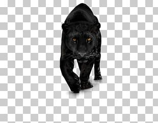 Black Panther Computer Icons PNG