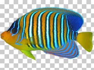 Tropical Fish Coral Reef Fish PNG