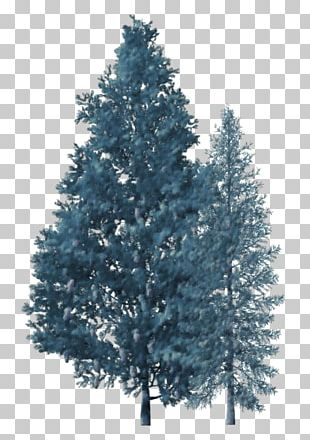 Spruce Christmas Tree Fir Branch PNG