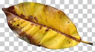 Autumn Leaf Color Autumn Leaf Color PNG