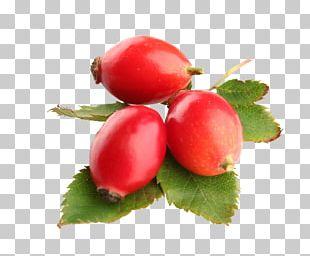 Rose Hip Seed Oil Carrier Oil Food PNG