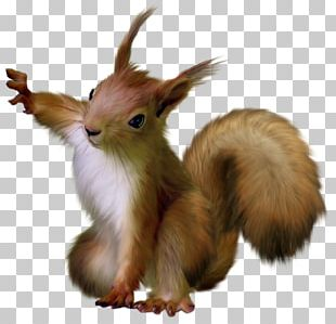 Rodent Tree Squirrels Raccoon PNG