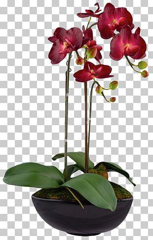 Moth Orchids Floral Design Flower Red PNG