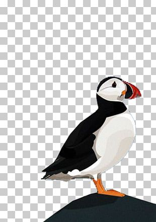 Puffin Parrot Bird Beak PNG