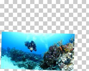 Playa Del Carmen Cozumel Caribbean Coral Reef Underwater Diving PNG