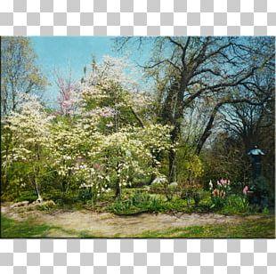Vegetation Garden Tree Flora Land Lot PNG
