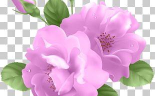 Blue Rose Flower PNG