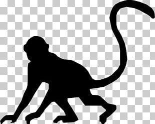Cat Silhouette Monkey PNG