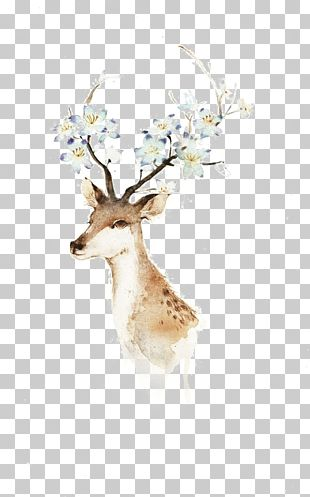 Deer Watercolor Painting Illustration PNG