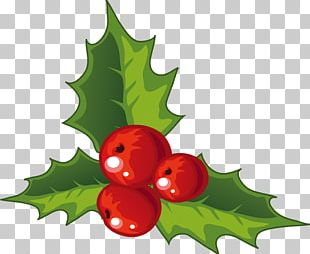 Holly Christmas Decoration PNG
