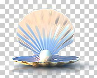 Seashell Computer File PNG