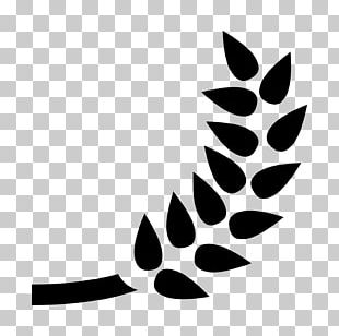 Beer Barley Computer Icons Wheat PNG