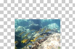 Coral Reef Fish Underwater Sea PNG