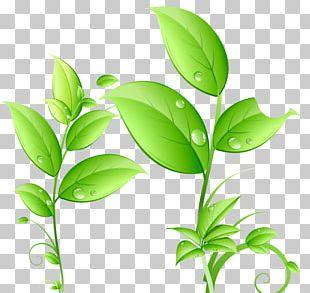 Green Drop Leaf PNG