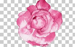 Garden Roses Watercolour Flowers Watercolor Painting Peony PNG