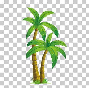 Arecaceae Coconut Tree Illustration PNG