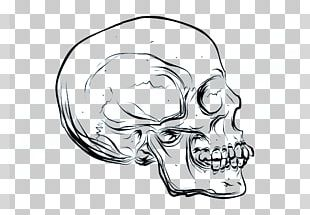 Drawing Skull Cartoon Euclidean PNG