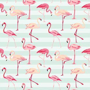 Flamingo Pattern PNG