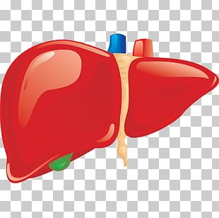 Liver Human Body Organ Anatomy Homo Sapiens PNG