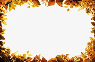 Autumn Leaves Border PNG