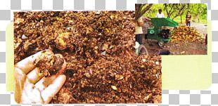 Hot Chocolate Cocoa Bean Husk Cacao Tree Compost PNG