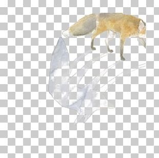 Arctic Wolf Canidae African Wild Dog Illustration PNG