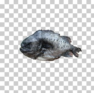 Sea Cucumber As Food Seafood Egg Roast PNG