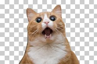 Cats And The Internet Lolcat Rage Comic Pet PNG