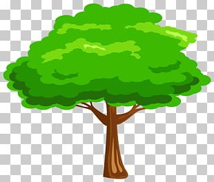 Tree Free Content PNG