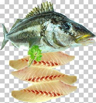 Fish Fillet Seafood PNG
