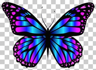 Butterfly Purple Blue PNG