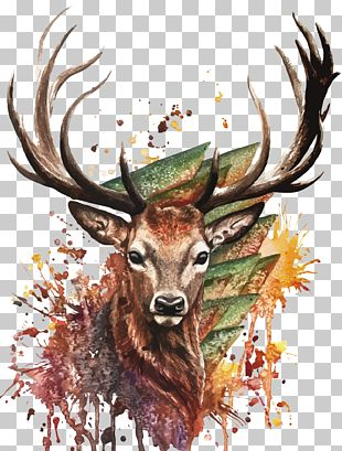 Deer Watercolor Painting Drawing PNG