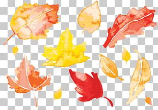 Autumn Leaves Watercolor Painting Leaf PNG