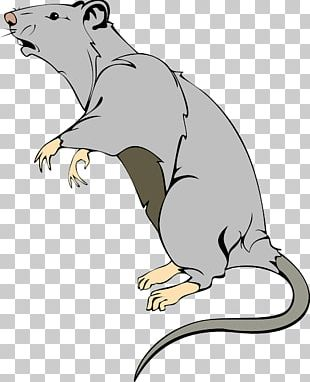 Brown Rat Mouse Laboratory Rat PNG