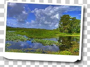Everglades Shark Valley John Pennekamp Coral Reef State Park Hammock Acadia National Park PNG