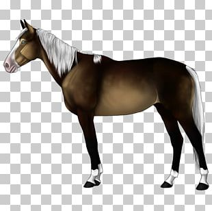 Appaloosa PNG Images, Appaloosa Clipart Free Download