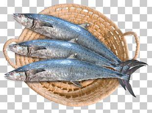 Saudi Arabia Bahrain Saudi Fisheries Narrow-barred Spanish Mackerel PNG
