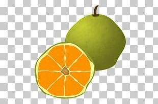 Ugli fruit stock photo. Image of background, food, color - 13281286