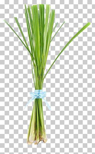 Cymbopogon Citratus Herb Lemon Oil Allium Fistulosum PNG