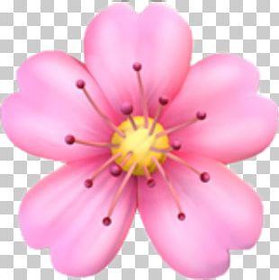 Emojipedia Flower Emoji Domain PNG