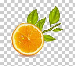 Orange Juice Lemon Fruit PNG