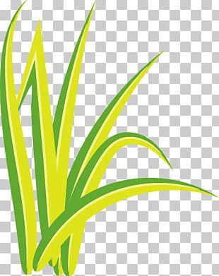 Watercolor Painting Leaf Simple PNG