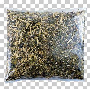 Nilgiri Tea Hōjicha Mate Tea Plant Silhouette PNG