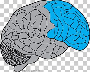 Lobes Of The Brain Frontal Lobe Prefrontal Cortex Motor Cortex PNG