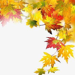 Autumn Elements PNG