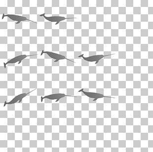 Bird Migration Flock Wader Water Bird PNG