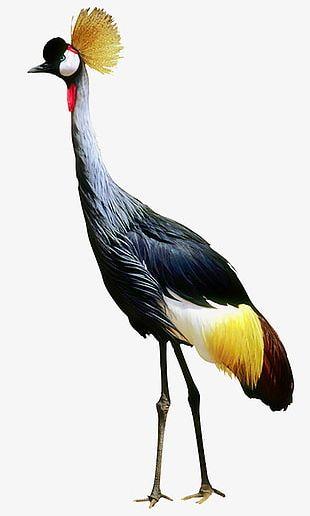 Birds Photos PNG