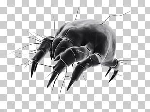 House Dust Mites Bed Bug PNG